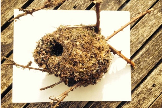 BBC Wildlife features editor Ben Hoare found this empty long-tailed tit nest lying in a country lane. © Ben Hoare