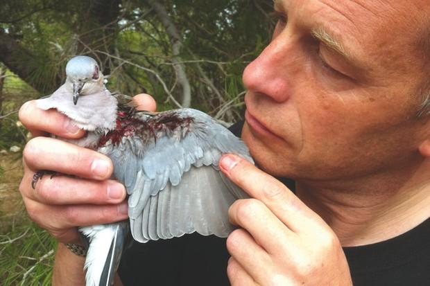 Chris Packham holds a turtle dove shot in Malta. ©Luke Massey/www.lmasseyimages.com