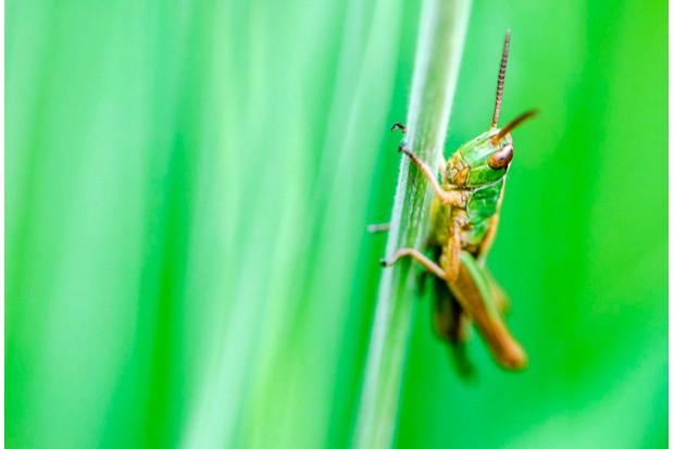 Grasshopper © Lucien Harris
