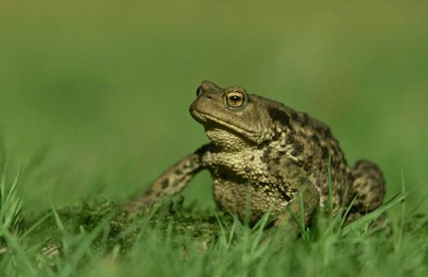 Main-toad-395f417
