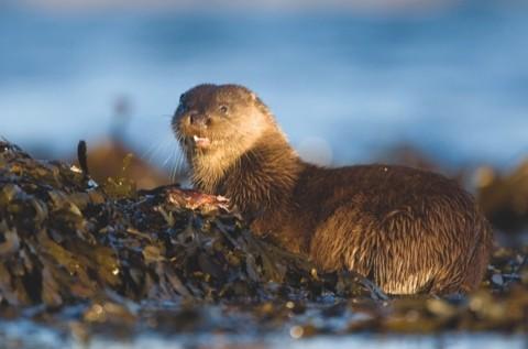 Otter-Eating-a-Fish-DG-Feb-10_artice-c903b61