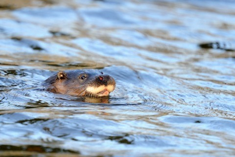 Otter2028c2920Amy20Lewis_480-3f1ccee