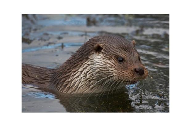 Otter 24