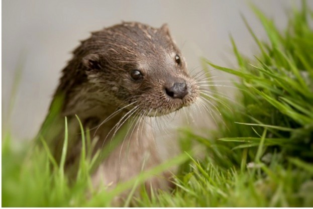 Otter_Andrew-Jacques_623-32f4498
