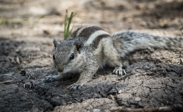 10 nutty facts about squirrels discover wildlife