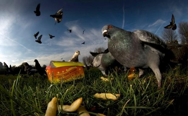 LONDON, UNITED KINGDOM - UNDATED: ***EXCLUSIVE*** Pigeons (