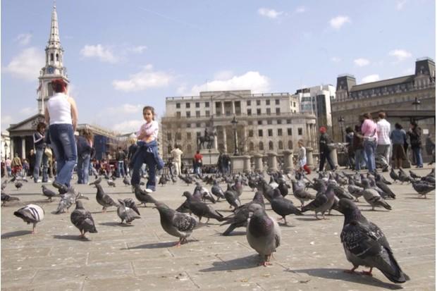 Pigeons20in20Green20Park_Tomos20Brangwyn3AWireImage3AGetty_623-a9b4f68