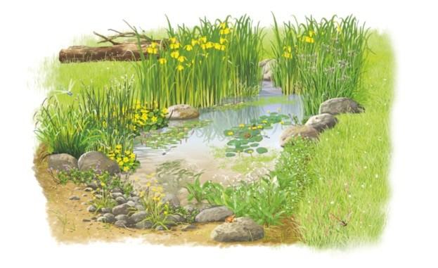 Illustrations by Stuart Jackson Carter