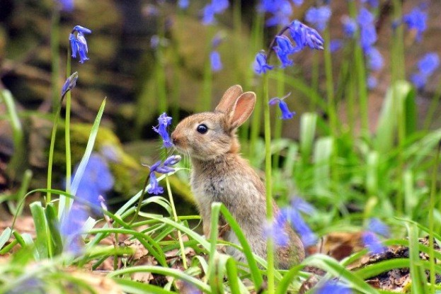 Rabbit© Kevin Rangeley
