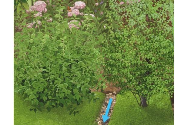 RainGarden20by20Stuart20Jackson-Carter_623_5-ed5db60