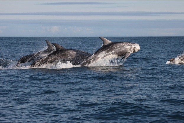 © Whale and Dolphin Conservation/Rob Lott