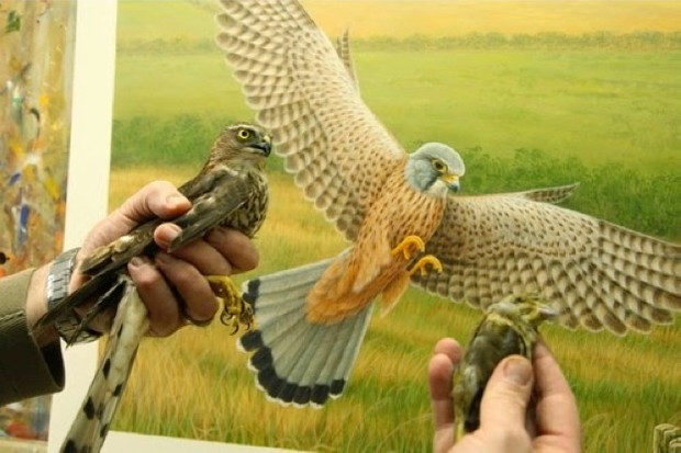 Robert-Fuller_Kestrel-painting_623-9d39388