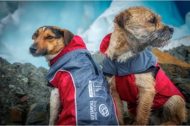 Rat detection dogs Will and Ahu (owned and trained by Miriam Ritchie) photographed here whilst working on The South Georgia Heritage Trust's Rat Eradication Project at Cheapman Bay in South Georgia, Antarctica on March 17 2018. Photo: Oliver Prince