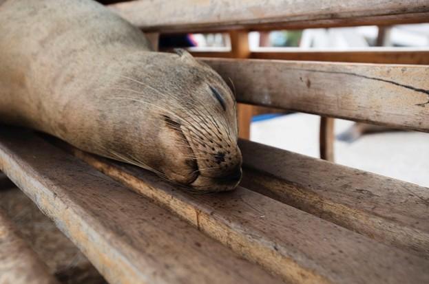 Sea-lion-188-Frances-Eyre_623-7c3eed6