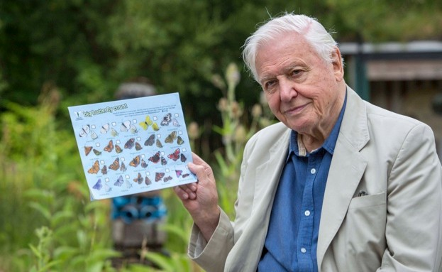 Sir David Attenborough is encouraging people to take part in the Big Butterfly Count © Butterfly Conservation