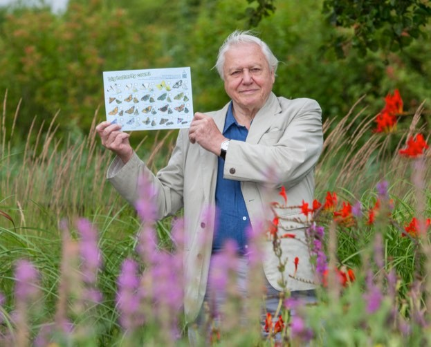 Sir David is urging people to take part in the 2016 Big Butterfly Count. © Butterfly Conservation