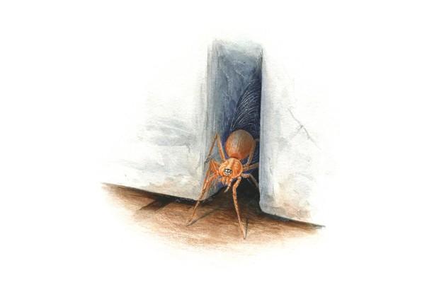 Six-eyed spider. © Sandra Doyle/The Art Agency