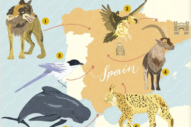 Spain-illustration-by-Dawn-Cooper_623-55788a5