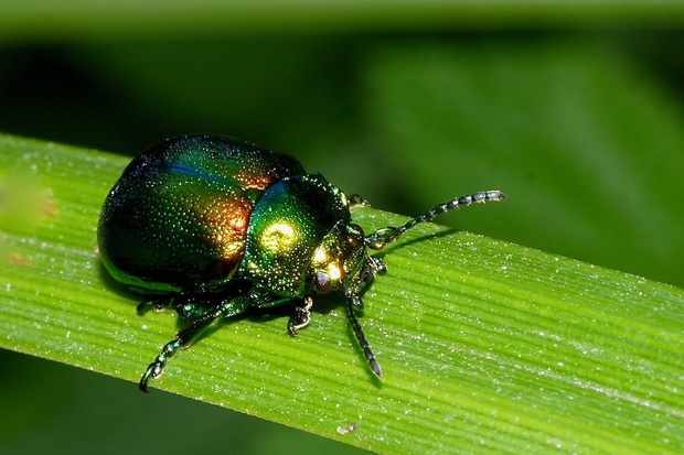 Endangered beetle recorded in a new county - Discover Wildlife