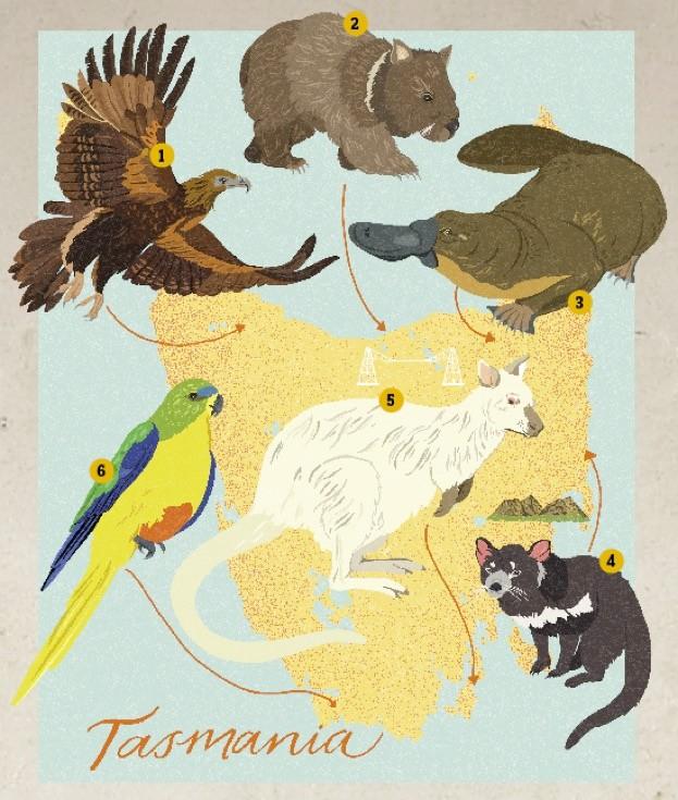 Tasmania-illustration-by-Dawn-Cooper_623-66676ad
