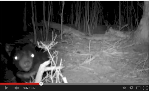 Tazmanian-Devil-video-screenshot_Heath-Holden_480-fcd8fa2