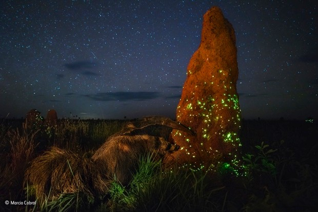 The-night-raider-©-Marcio-Cabral-Wildlife-Photographer-of-the-Year_623-dba0760