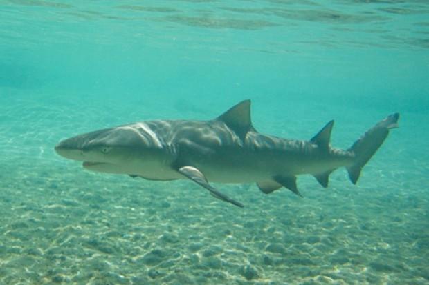 Thiago-Fernandes-Barbosa_shark_623-904bdc7