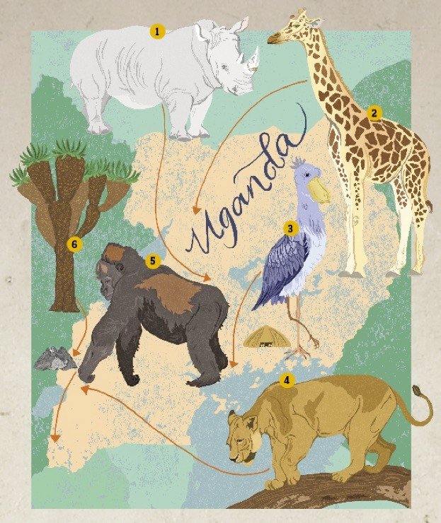 Uganda-illustration-by-Dawn-Cooper_623-7c3c313