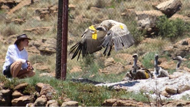 Vultures_623-881ecb8