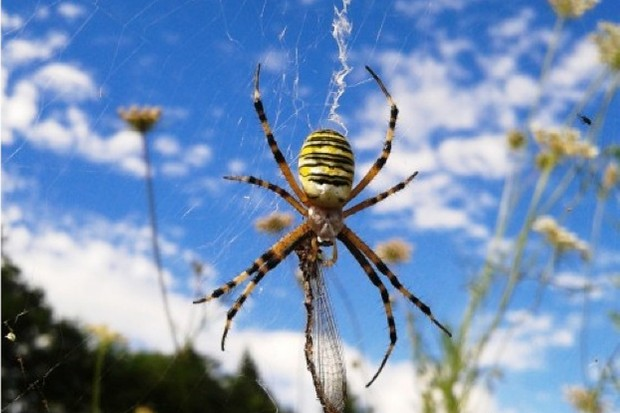 14 Incredible Spider Facts Discover Wildlife