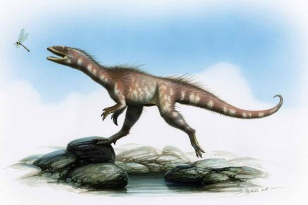 An artist's impression of 'Dracoraptor hanigani', the 200-million-year-old dinosaur found on a beach in Wales. © Nicholls 2015