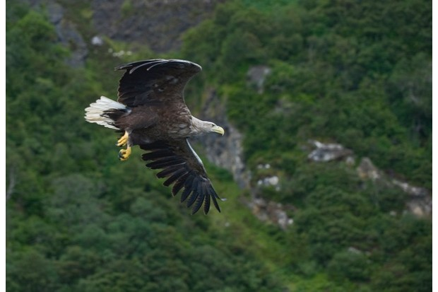 White-tailed20eagle20Blackpool20College20Getty_623-9defc8b