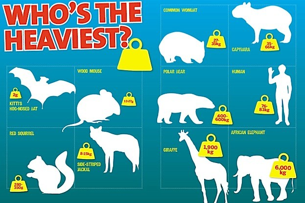 Who-is-the-heaviest_The-Big-Book-of-Mammals_BBC-Wildlife__623-d2efcd0