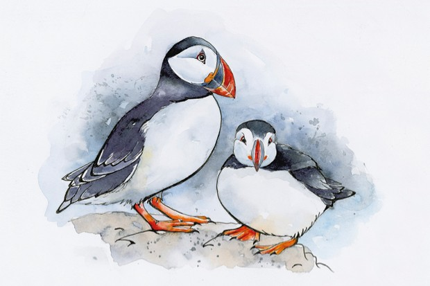 Wild-and-free-extract_puffins_623-c89e754