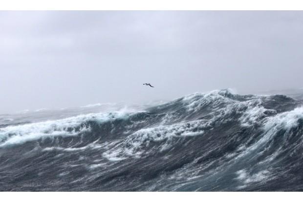 albatrossstorm_dimas_623-78f26be
