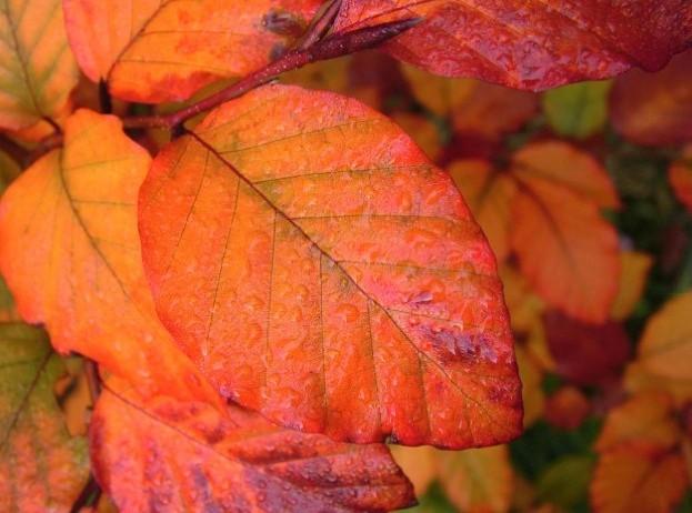 autumnleaf_shaunparrin_623-5f7c849
