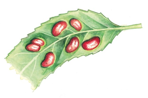bean-galls_Felicity-Rose-Cole_623-8128005