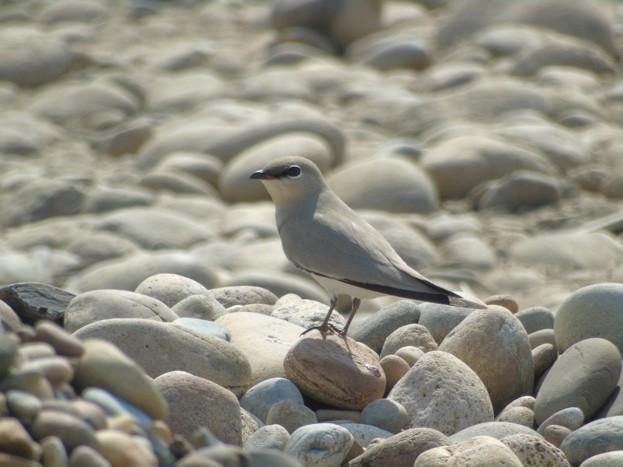 birdmain-2eec6d2