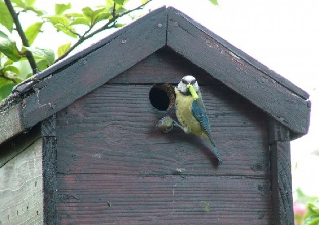 bluetit_james-gallagher_623-9dd7fb7