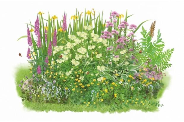 illustrations by stuart jackson carter - Bog Garden