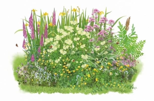 How to make a bog garden for wildlife