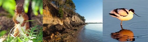 brownsea_comp-e3996c1
