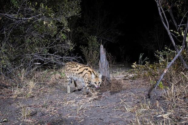 Amazing photos of Zambezi wildlife aid conservation efforts