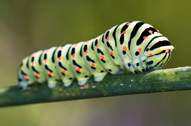 Why Are Caterpillars So Varied Discover Wildlife