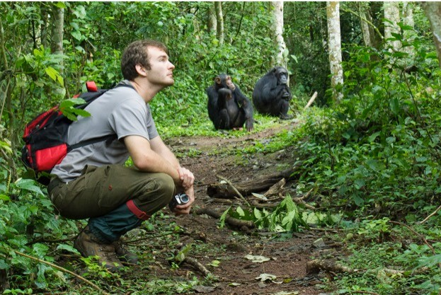 Dr Thibaud Gruber and two chimps in Uganda's Budongo Forest. © Nina Hänninen