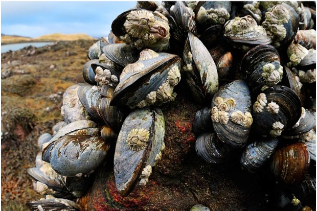 common20mussel2085582020L.Campbell_623-ba456c6