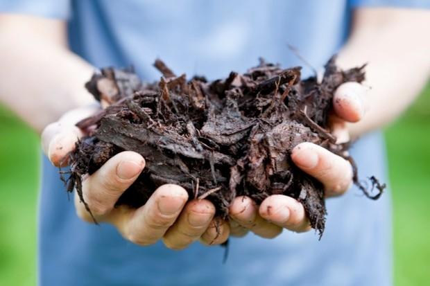 compost_623_istock-116fdcd
