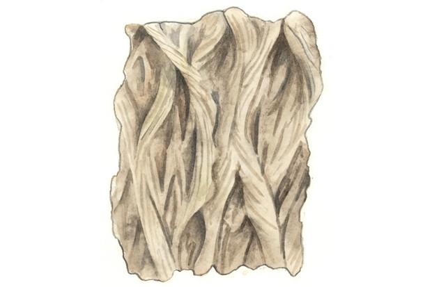 Crack willow tree bark