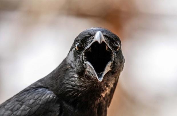 crow_ElangovanS_623-b3f08f0