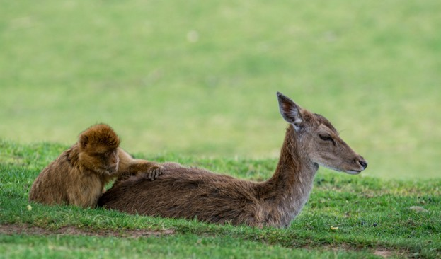 deer-and-monkey_623-a3eb026